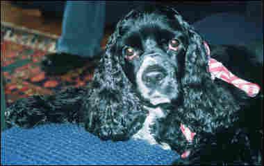 Davar Ardalan's dog Lucy.