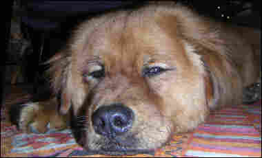 Elizabeth Shogren's dog Trekker