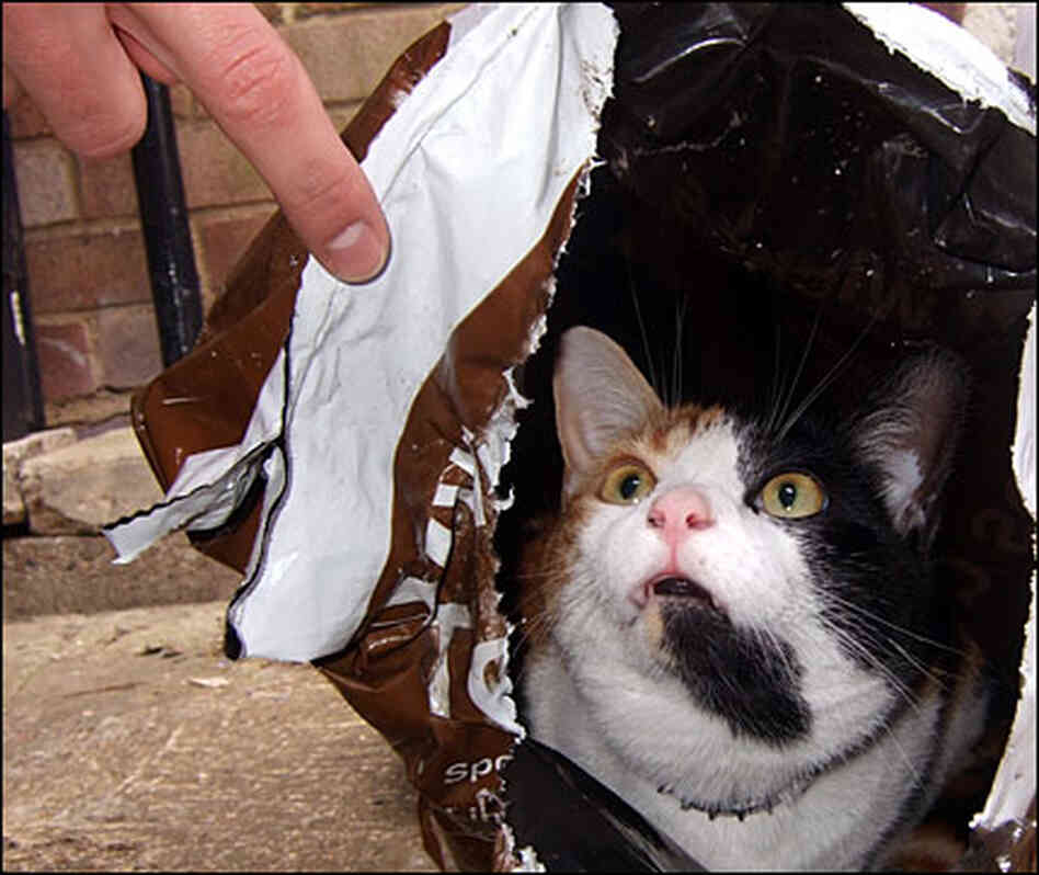 A cat sits in a bag; his owner doesn't approve
