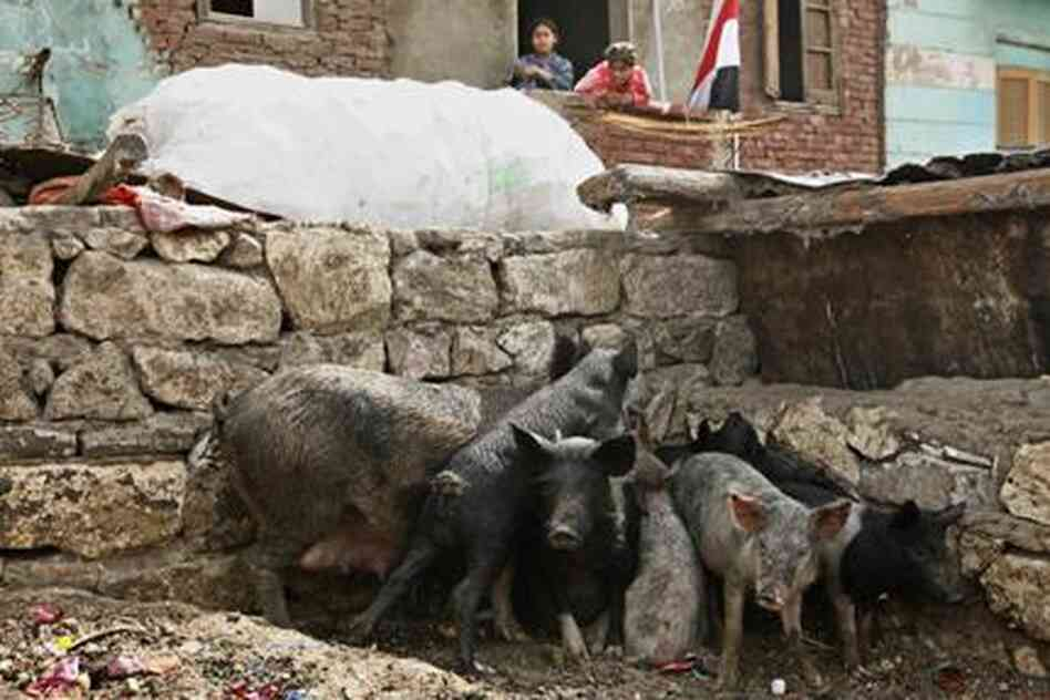 egyptianpigs