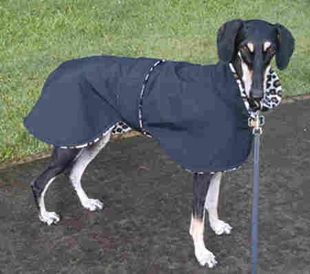 raincoat-dog-saluki.jpg
