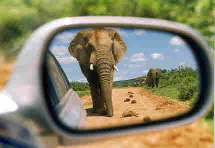 elephant.gop