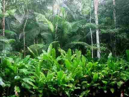 generic jungle green