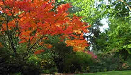 orange, yellow and pink fall foliage