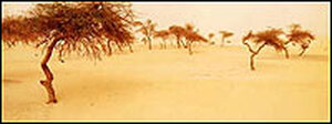 Trees in the African desert from cover of 'Acts of Faith'