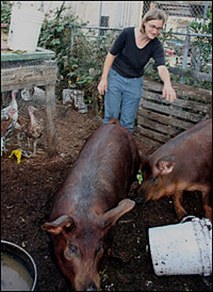 Novella Carpenter and pigs