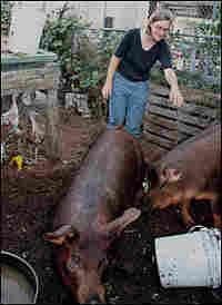 Novella Carpenter and pigs