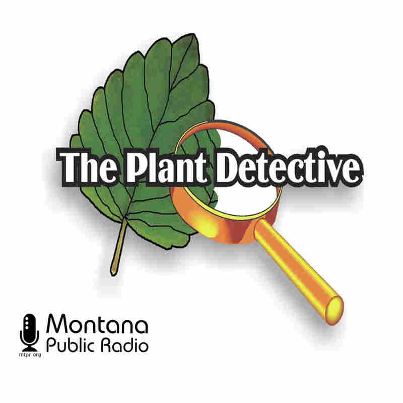 The Plant Detective