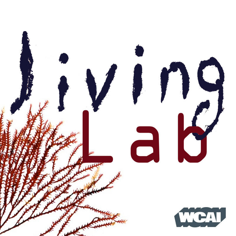 "radio lab inheritance podcast Radiolab podcast ""inheritance"" homework assignment  listen to the first three stories of the ""inheritance"" radiolab podcast (control + click on link to access."
