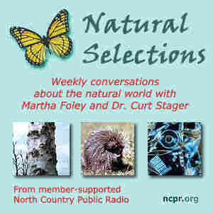 Channel image: Natural Selections