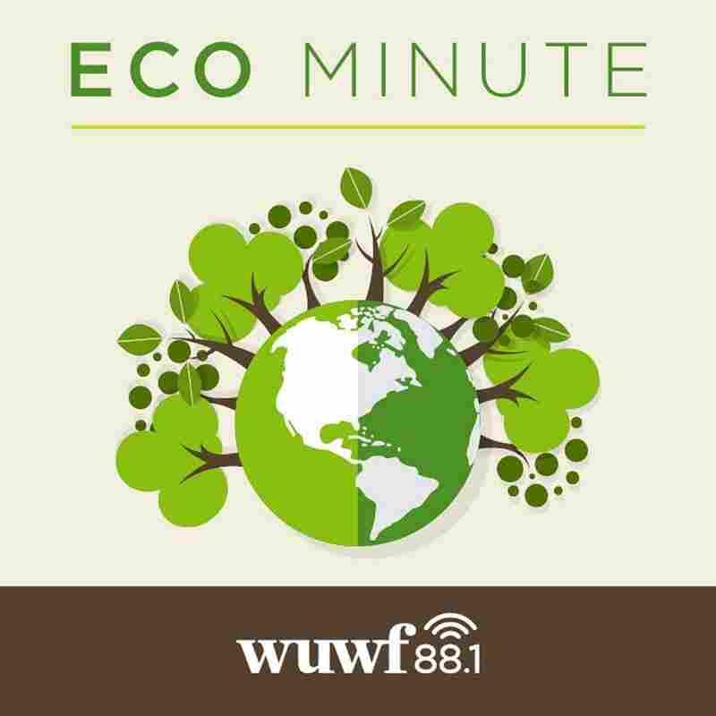 Eco Minute