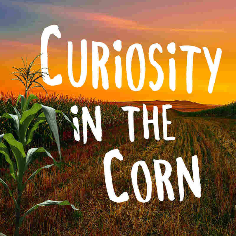 Curiosity in the Corn