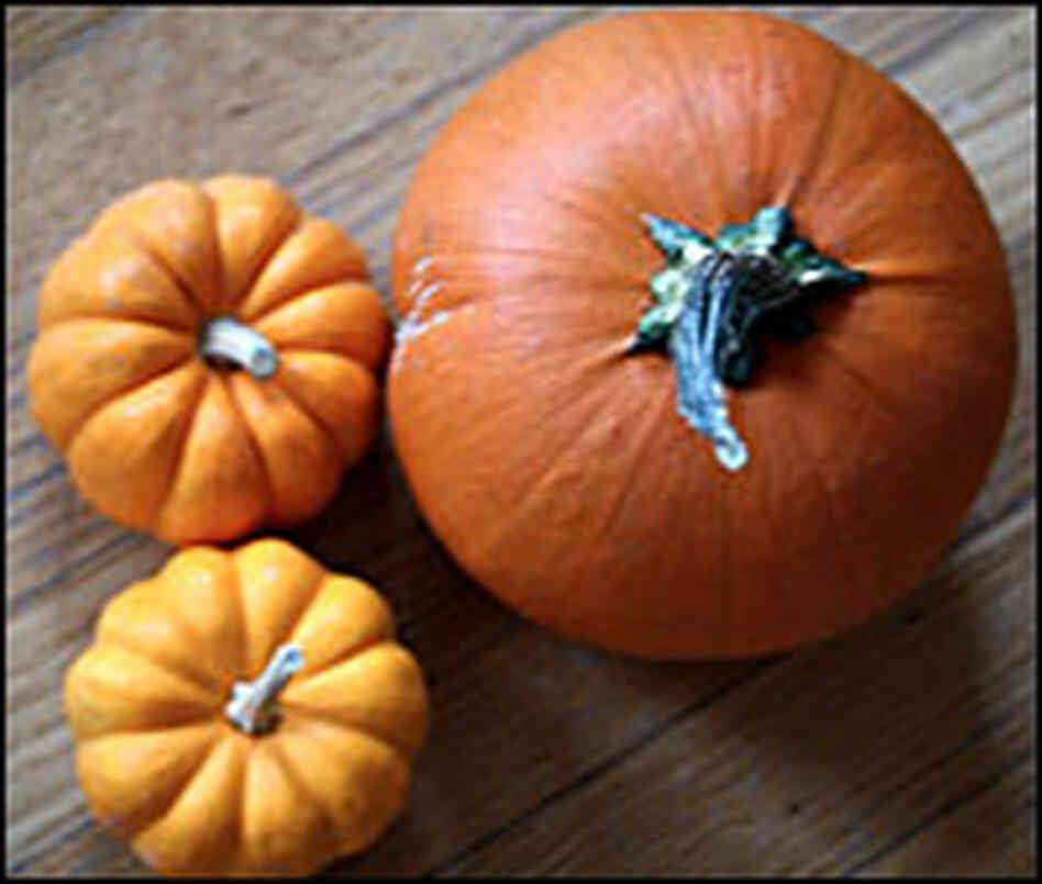 Three orange pumpkins are viewed from overhead