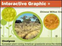 Interactive: The Most Loathed Invasive Species