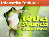 Interactive: Sounds Wild Animal Cards