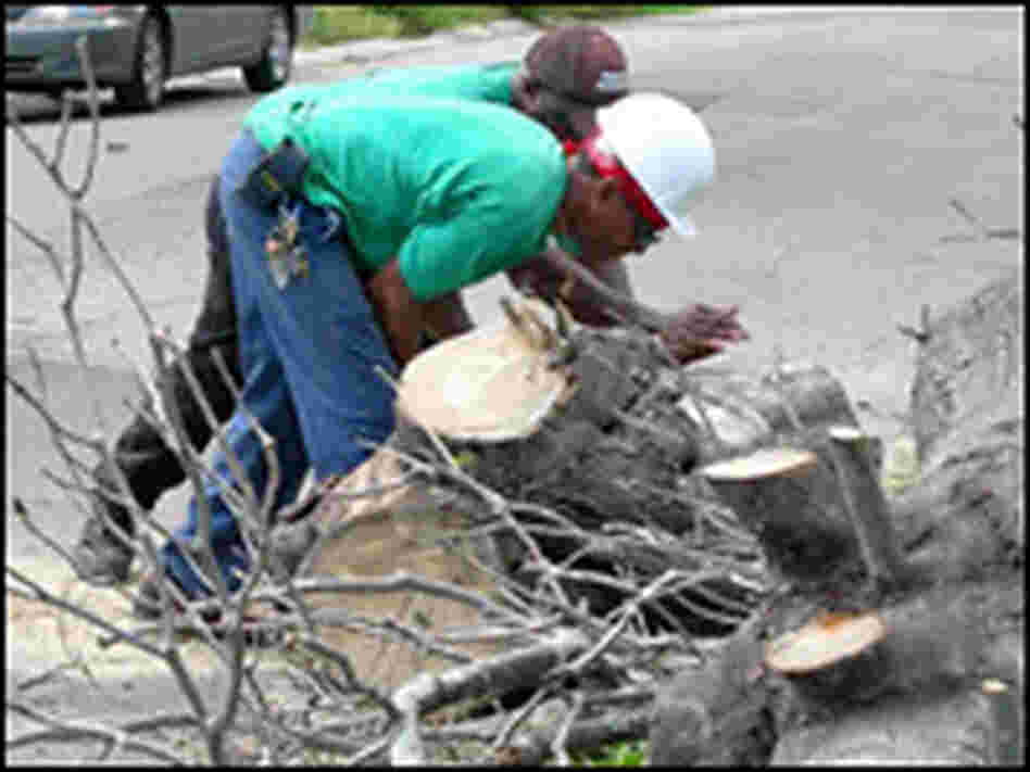 A New Orleans Parks division has a crew supervisor and 5 workers out cutting down trees.