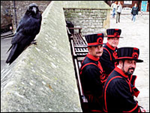 Raven and Beefeaters at the Tower of London