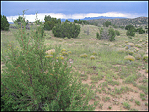 A green burial site is planned for this area in the Galisteo Basin Preserve near Santa Fe, N.M.  Unlike conventional cemeteries, the landscape will not change after bodies are buried here.