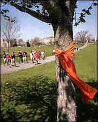 Ribbons adorn trees on the Virginia Tech campus drill field, one week after the deadly attacks.