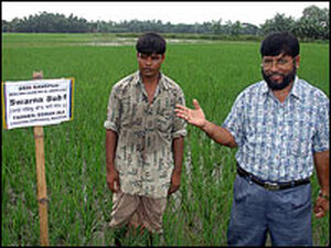 Dr. Mazid stands in modified rice field.