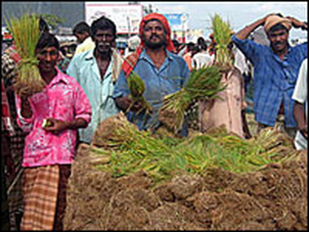 Men sell rice seedlings along a highway. Rice is an important staple in Bangladesh.