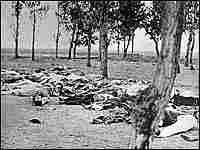 Armenian casualties of genocide