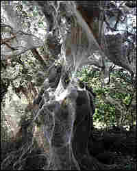 A giant spider web at Lake Tawakoni State Park in Texas.