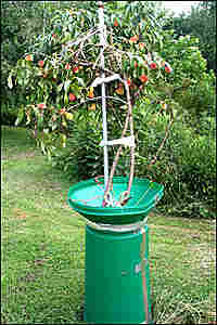 Commentator Julie Zickefoose duct-taped a yard funnel to her peach tree to keep raccoons away.