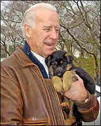 Joe Biden and his family's German shepherd puppy.
