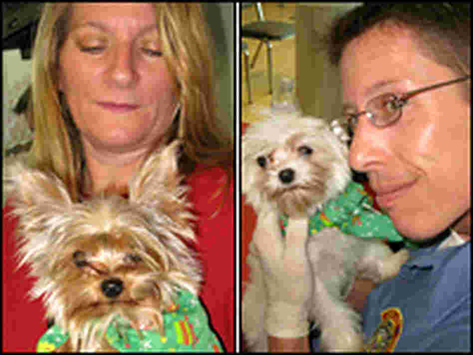 Los Angeles animal welfare workers hold a miniature Yorkshire terrier and a miniature Maltese.