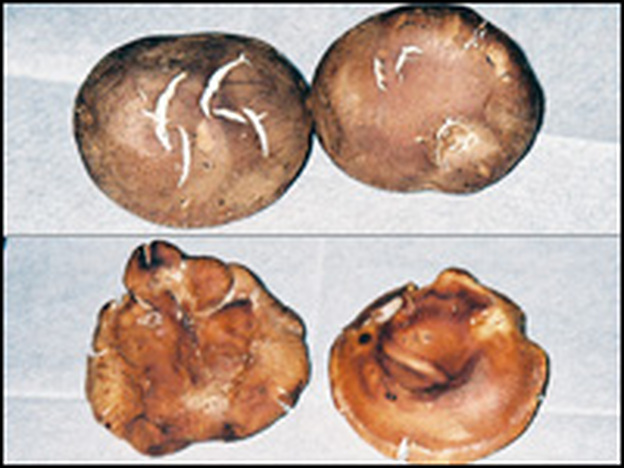 Can you tell which mushrooms were grown in California and which came from China? Click the photo for the answer.