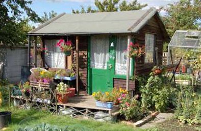 The garden shed is a home away from home for John Wilson (Plot 84F) of the South Croydon Allotment Society, in London. [Source: NPR]