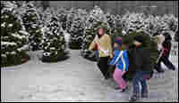 A group of fourth-grade students carry a Christmas tree.