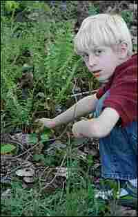 Liam, 8, discovers two morels growing together beneath a cinnamon fern.