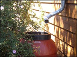 Olive Barrel