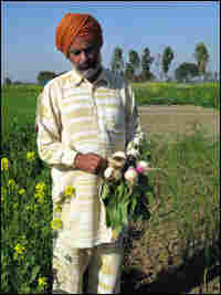 Amarjit Sharma grows organic vegetables for his family of seven.
