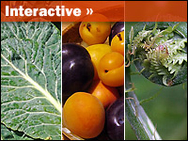 [Interactive:Farm Food Interactive]