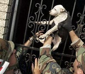 Texas National Guardsmen rescue a dog from a warehouse west of New Orleans