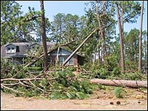 House covered with fallen trees.