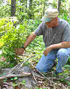Pioneer Forest manager Clint Trammel