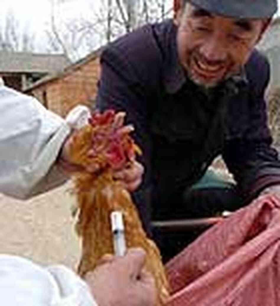 Asian bird flu sacramento
