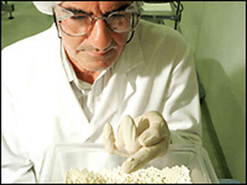 A technician at a Merck manufacturing plant performs a quality check on a batch of Vioxx.