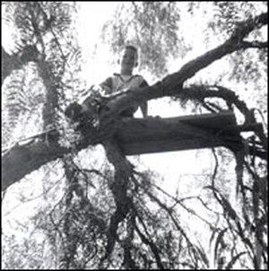 Howard Dully, tree climbing in Los Altos, Calif., 1955.