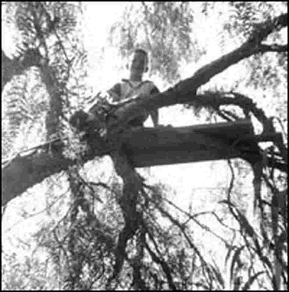 Howard Dully, tree climbing in Los Altos, Calif., 1955.