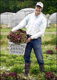 Alex Hitt harvests red-leaf lettuce at Peregine Farm in Graham, N.C.,