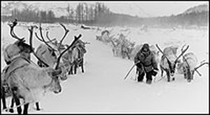 Reindeer and a herder stand in the snow on a frozen river.