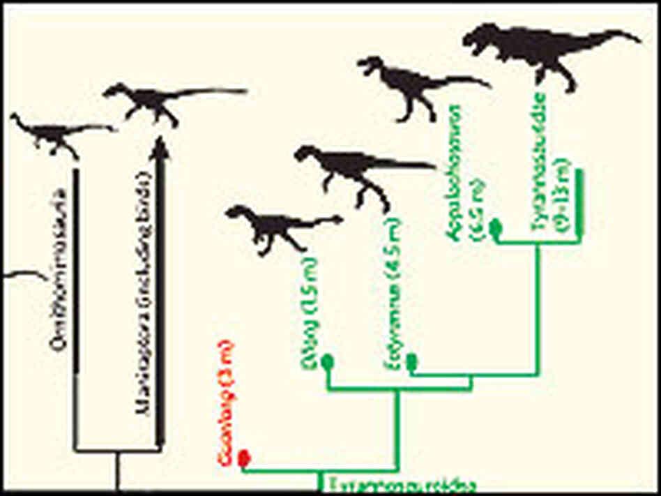 T rex had humble origins npr for T rex family
