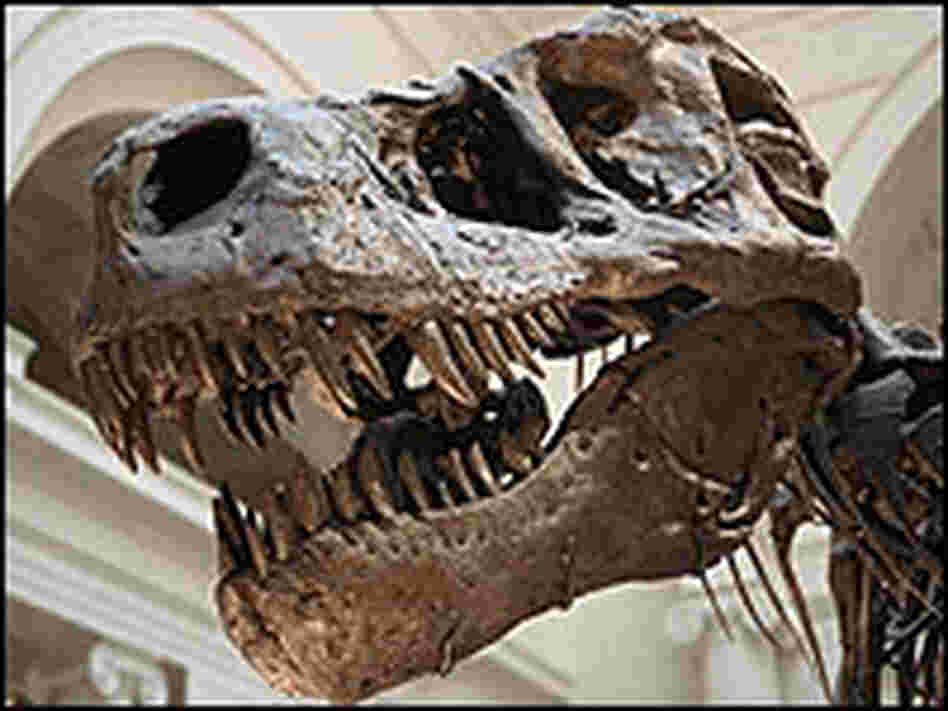 "the Field Museum's ""Sue,"" one of the largest T. rex skeletons found."