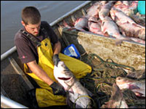 Commercial fisherman Jeremy Fisher