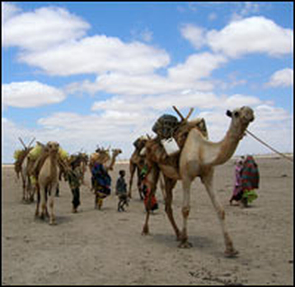 Local water sources have dried up, forcing people to walk more than 40 miles to find water and haul it back with their camels.